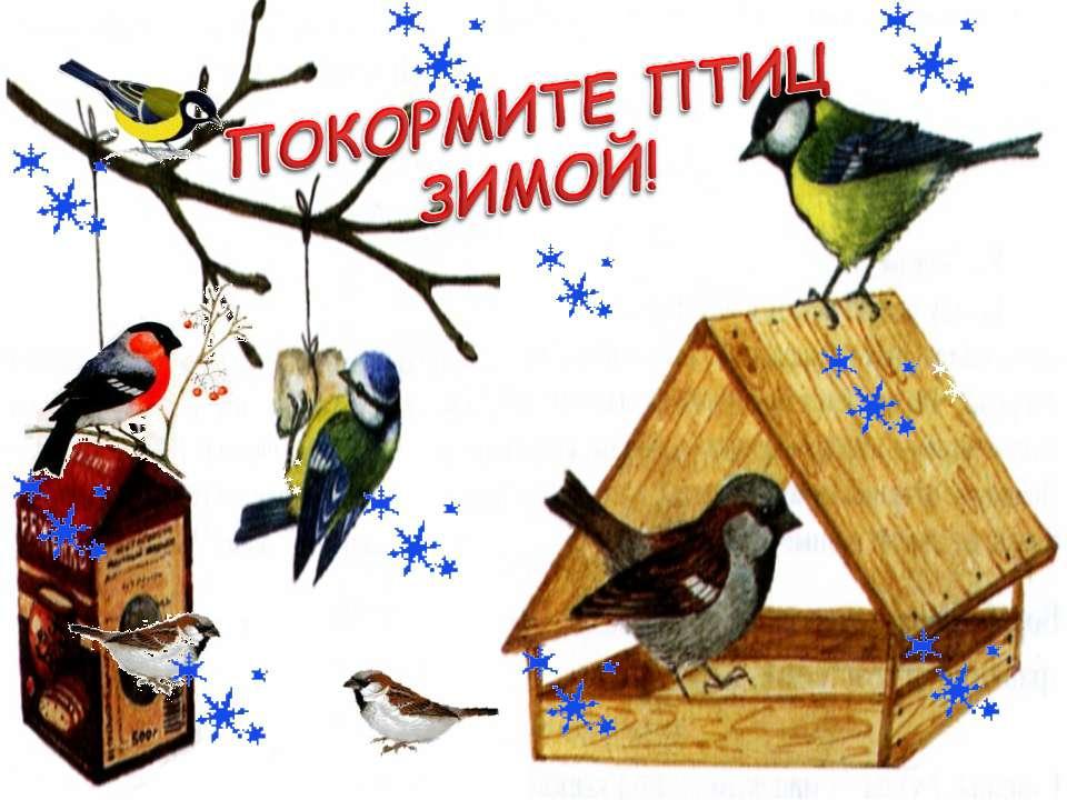 """Экологическая акция """"Покормите птиц зимой!"""""""